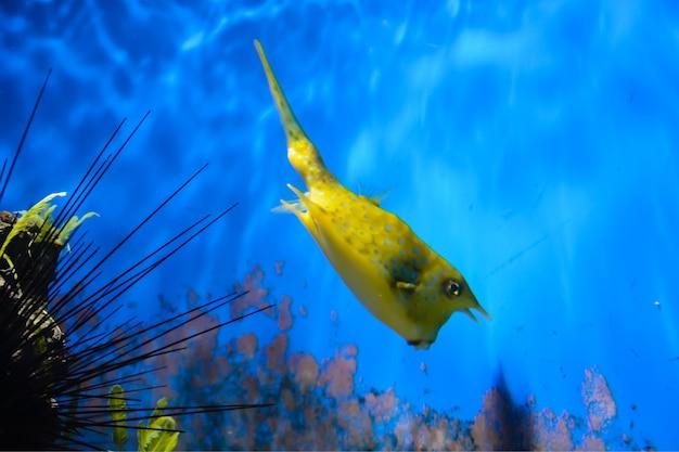背景に藻類と青い背景の水族館で泳ぐ小魚。ロンドン。