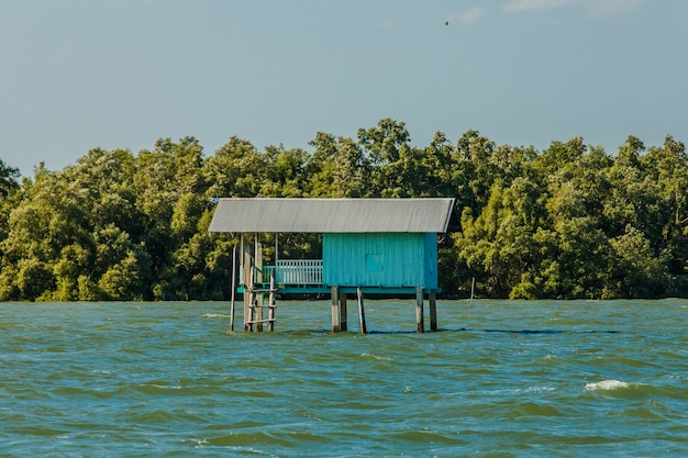 Small fisherman house and mangrove forest
