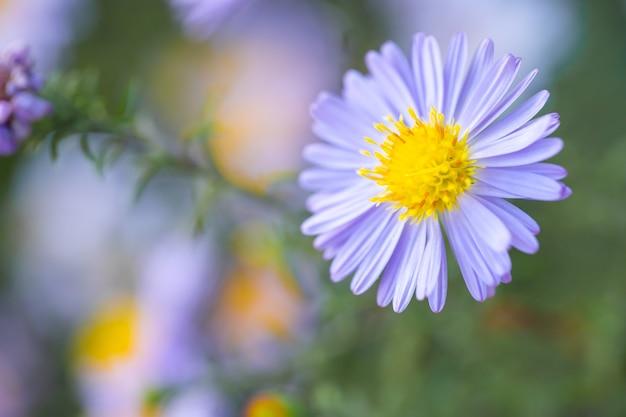 자연 속에서 자라는 작은 꽃