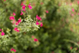 Small flowers on bush in garden
