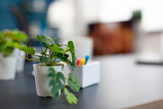 空のアパートのオフィスの机の上の小さな花。美しいインテリアデザインで誰もいない居心地の良い家のリビングルーム。