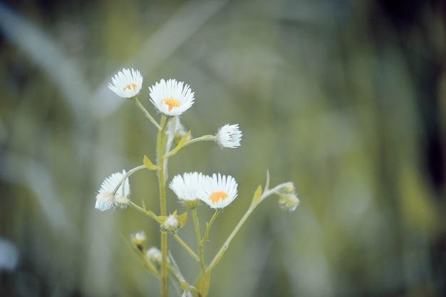 짙은 녹색 배경에 흰색 꽃잎과 노란색 수술이 있는 작은 꽃, 필터