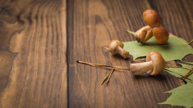 木製のテーブルの上の小さな森のキノコと紅葉。森からの自然な菜食主義の食糧。