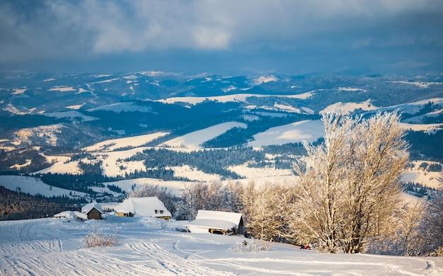 흰 서리로 덮인 작은 깨지기 쉬운 나무는 겨울 산을 배경으로 한 눈 더미에서 외로운 자랍니다. 죽어가는 숲과 나쁜 생태의 개념