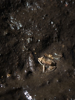 A small frog in the mud at night