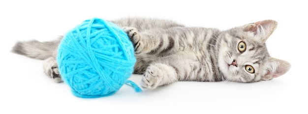 小さな面白い子猫と糸のクルー。白で隔離
