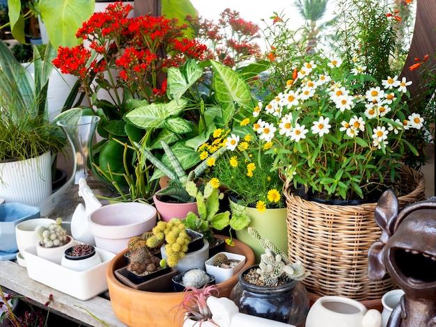 나무 선반에 다양한 종류와 크기의 화분에 아름다운 꽃, 녹색 잎, 선인장이있는 작은 정원 코너.