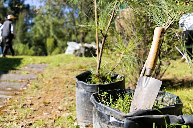 A small garden shovel leaning against a small tree, in the background more trees and people reforesting