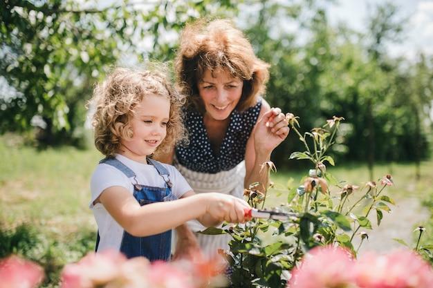 A small girl with senior grandmother gardening in the backyard garden.