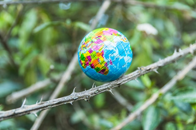 Small globe on branch of tree