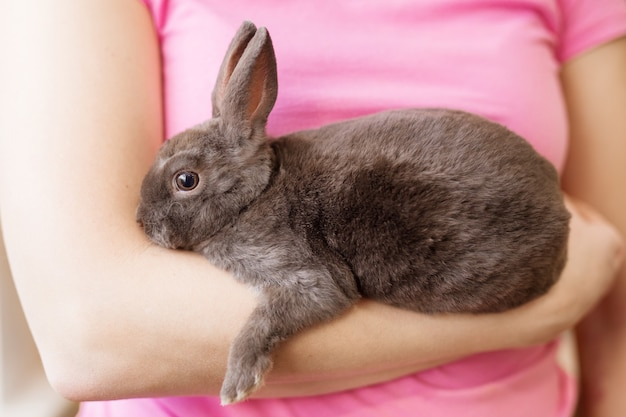 작은 회색과 검은색 신생아 블라인드 토끼