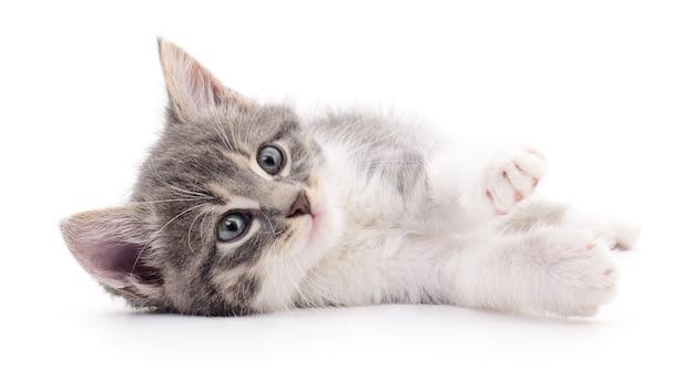 Маленький серый котенок, изолированные на белом фоне.