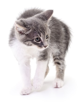 Маленький серый котенок, изолированные на белом фоне. Premium Фотографии