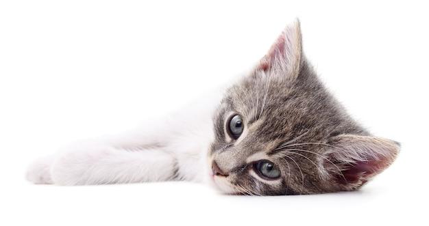 孤立した小さな灰色の子猫