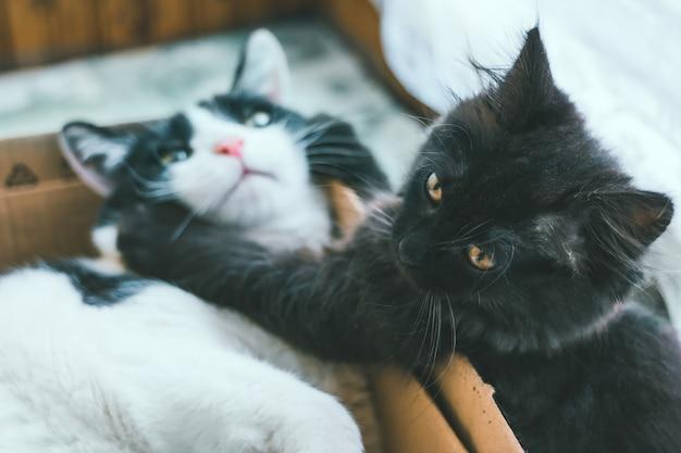 작은 회색 고양이는 흑백의 늙은 고양이와 노는다