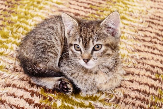 テキスタイルの背景に表された小さな灰色の子猫
