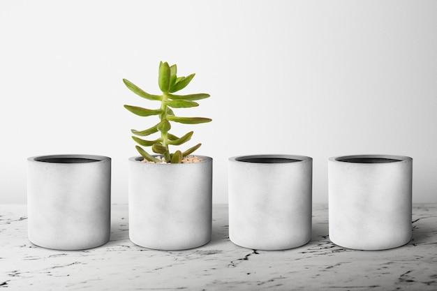 Piccoli vasi per piante grigi in fila con una succulenta