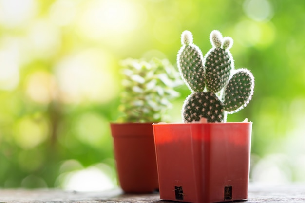 Small green cactus plants pots in garden