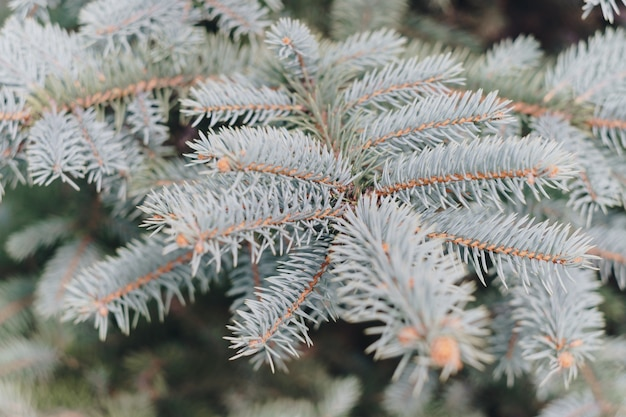 Small green fir trees in the park close up