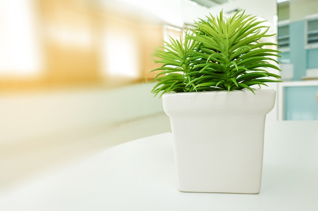 Small green fresh vintage tree in white flowerpot on table in office.