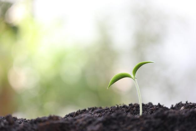 물방울과 작은 녹색 성장 식물