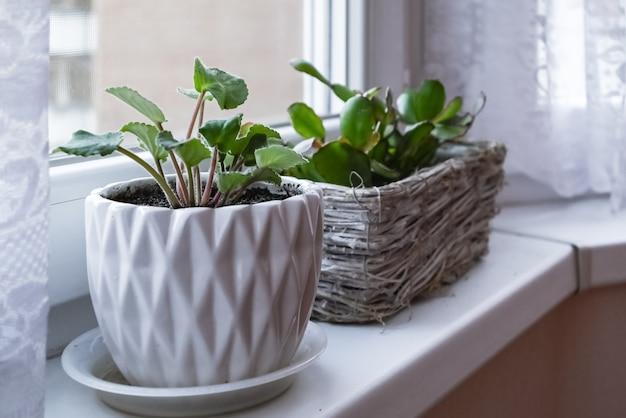 창턱에 흰색 냄비에 작은 녹색 housplants
