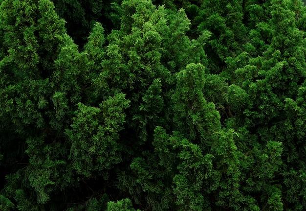植物の小さな緑の葉