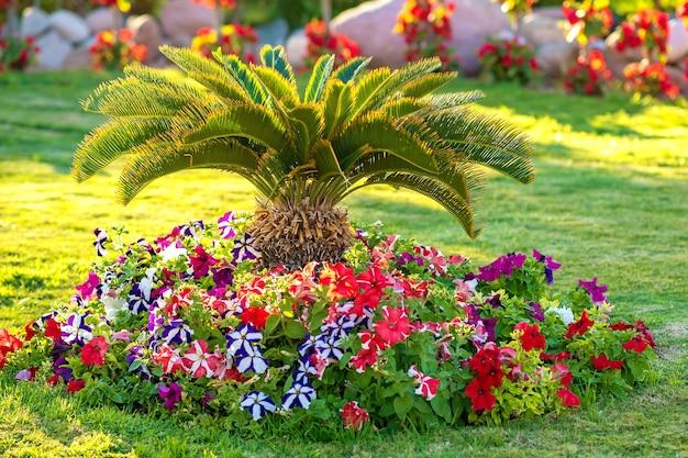 熱帯のホテルの庭の草で覆われた芝生の上に生えている鮮やかな花に囲まれた小さな緑のヤシの木。