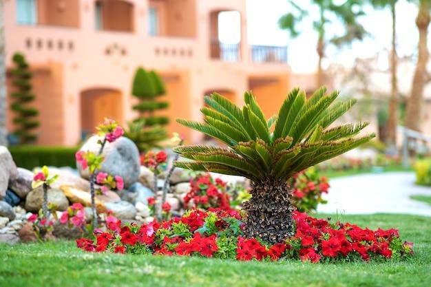 밝은 개화 꽃으로 둘러싸인 작은 녹색 야자수