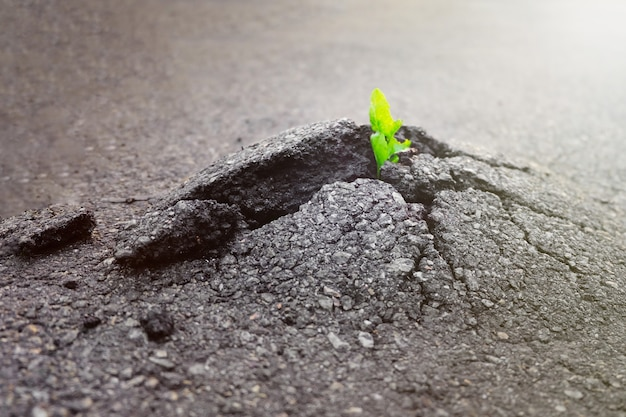 Small and green plant grows through urban asphalt ground. green plant growing from crack in asphalt on road.  space for text or design.