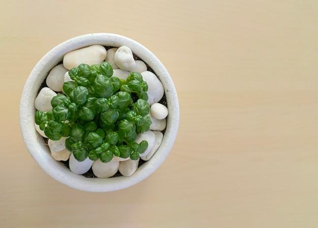 나무 테이블에 작은 녹색 식물 냄비