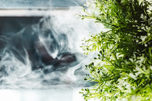 Small green plant with white smoke in background