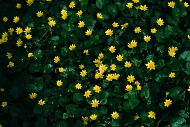 Маленькие зеленые растения цветут с маленькими желтыми цветами