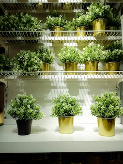 Small green plants in golden pots on the white shelves