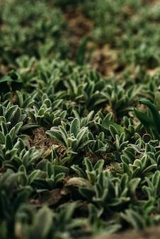 Маленькие зеленые растения растут весной