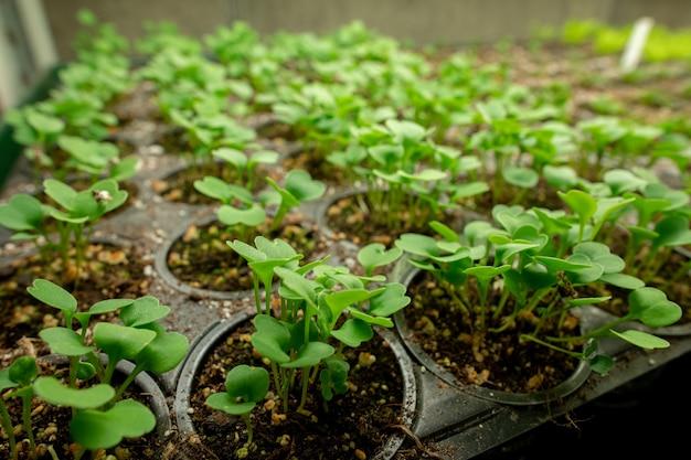 주변에 아무도 없는 현대적인 대형 수직 농장이나 온실 내부에 줄지어 있는 수정된 토양에서 자라는 검은 화분에 있는 작은 녹색 묘목
