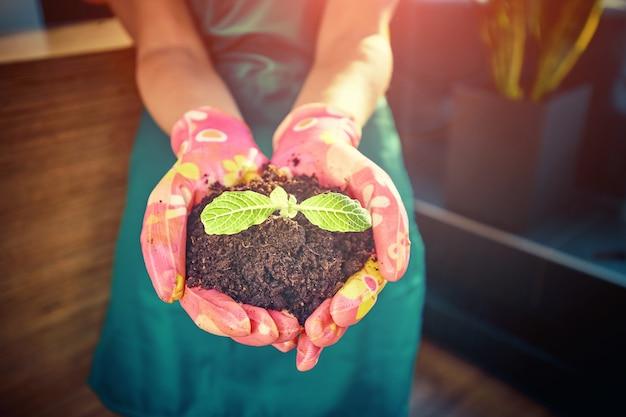 토양의 배경에 대해 돌보는 손에 작은 녹색 새싹. 새로운 삶의 상징