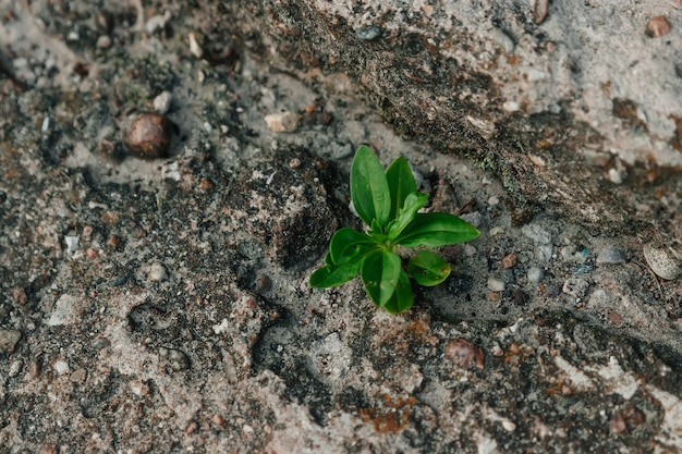 A small green sprout makes its way through concrete. the  of struggle, confrontation. close-up. copyspace.