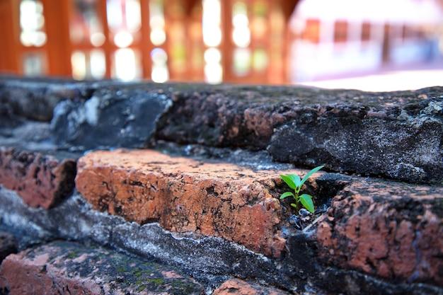 Маленькие зеленые деревья, прорастающие на стене из красного кирпича, олицетворяют надежду и рост, мягкий фокус