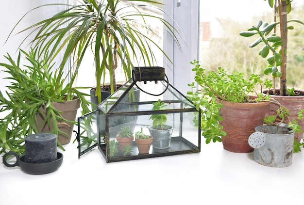 Small greenhouse with houseplant put on the edge of a window at home