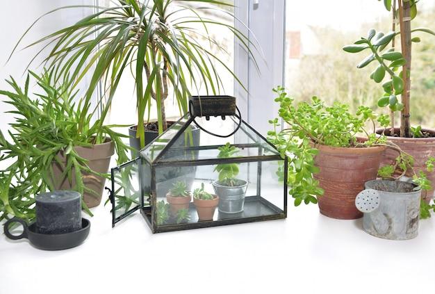 Небольшую теплицу с комнатным растением ставят по краю окна дома