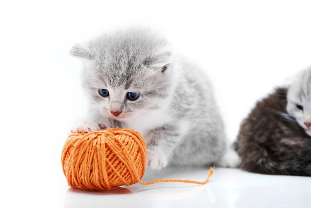 Small grey adorable kitten playing with orange ball with kitties are playing in white phot