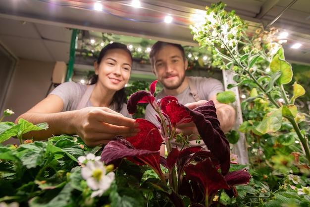 작은 그룹의 젊은 농부 또는 선택 주의자들이 식물을 재배하고 그들 중 하나의 잎을 들고 정원 침대를 구부립니다.