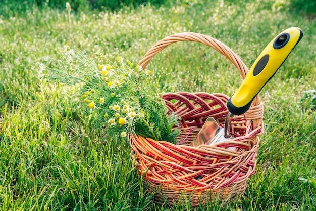 Небольшой ручной садовый шпатель и букет полевых ромашек в плетеной корзине с зеленой травой на заднем плане. садовые инструменты