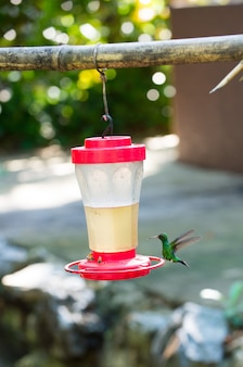 Маленькая колибри с длинным клювом, летящая возле кормушки или поилки с пчелой в солнечном свете на открытом воздухе на естественном фоне