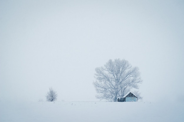 안개가 자욱한 겨울 날 눈으로 덮여 큰 나무 앞의 작은 오두막