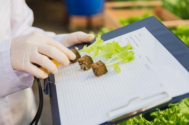 Small hydroponic lettuce plant