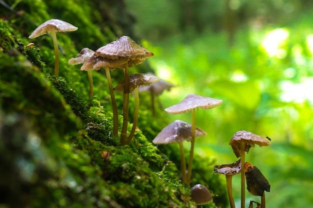 森の小さな食用キノコ