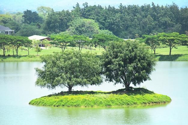 작은 섬에는 연못 한가운데에 두 개의 큰 나무와 거위가 있습니다.