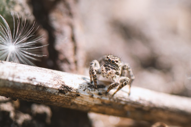 Small jumping spider in the garden, close up.
